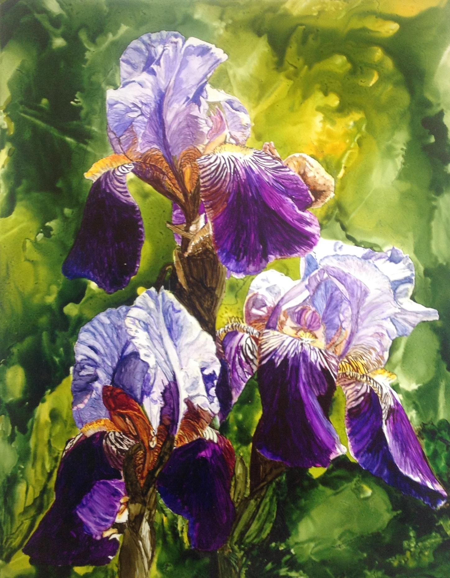 Purple_Iris_