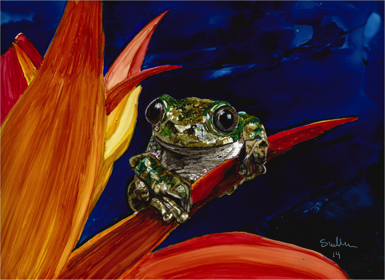 Williams_Sheryl__Peacock_Tree_Frog