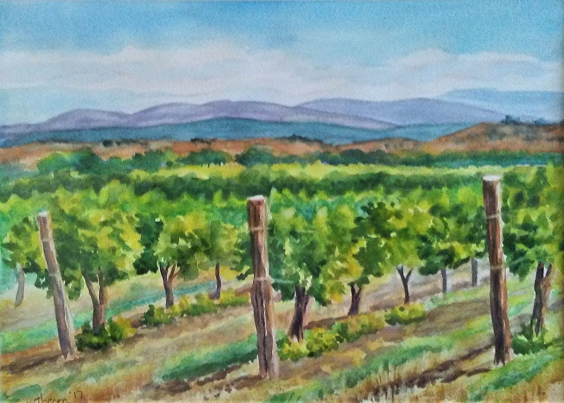 Vineyard at Stoney Mesa