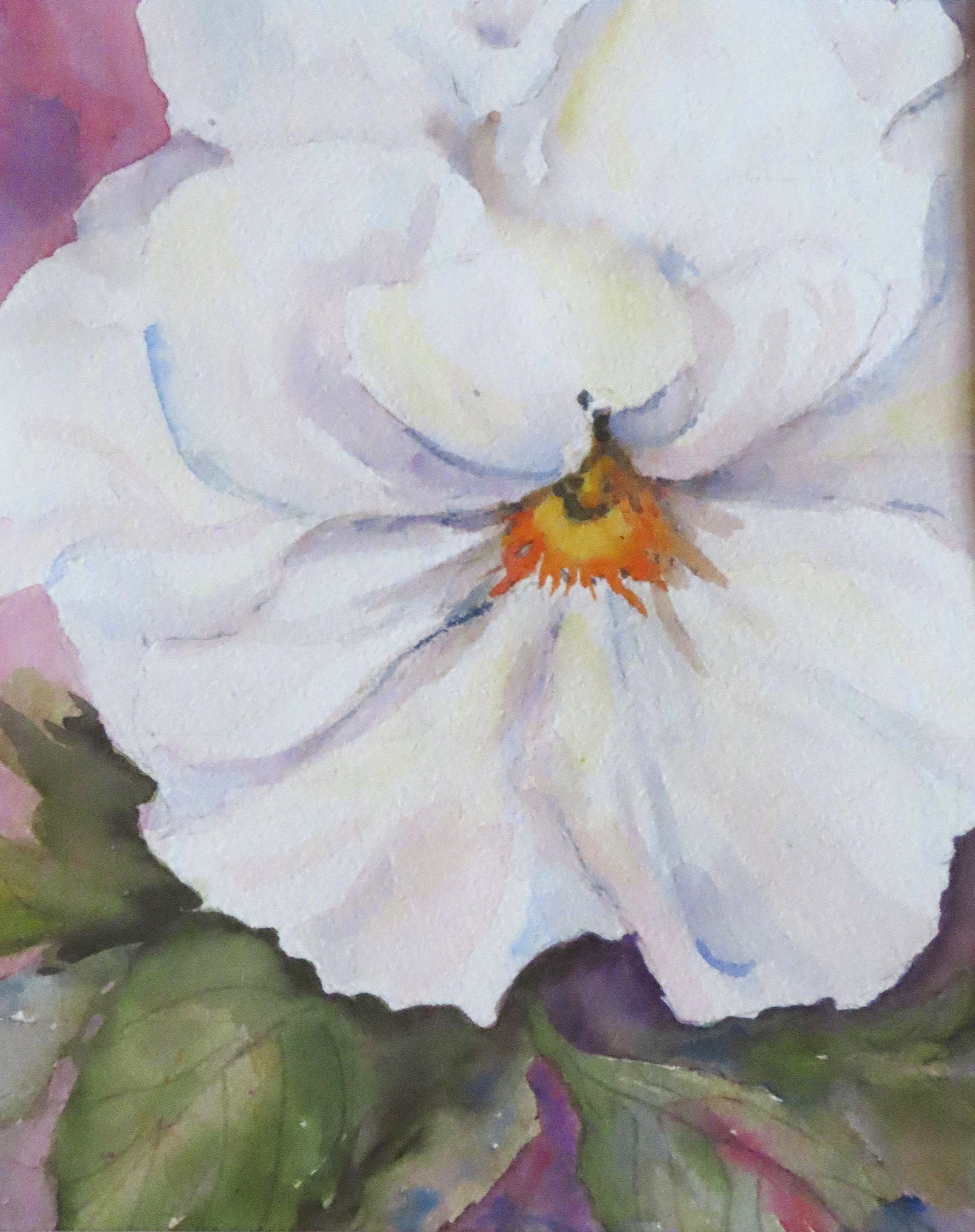 Pansy in white